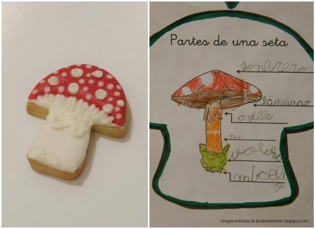 doctorcookies-partes-de-una-seta