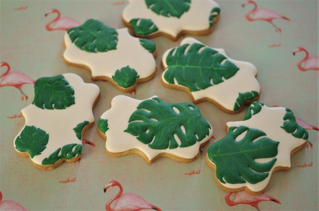 doctorcookies monstera deliciosa (2)