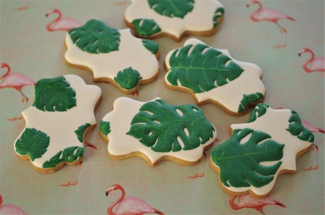 doctorcookies monstera deliciosa (2)