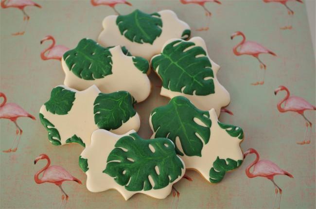 doctorcookies monstera deliciosa (5).JPG
