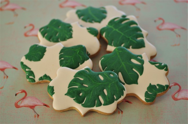 doctorcookies monstera deliciosa (6)